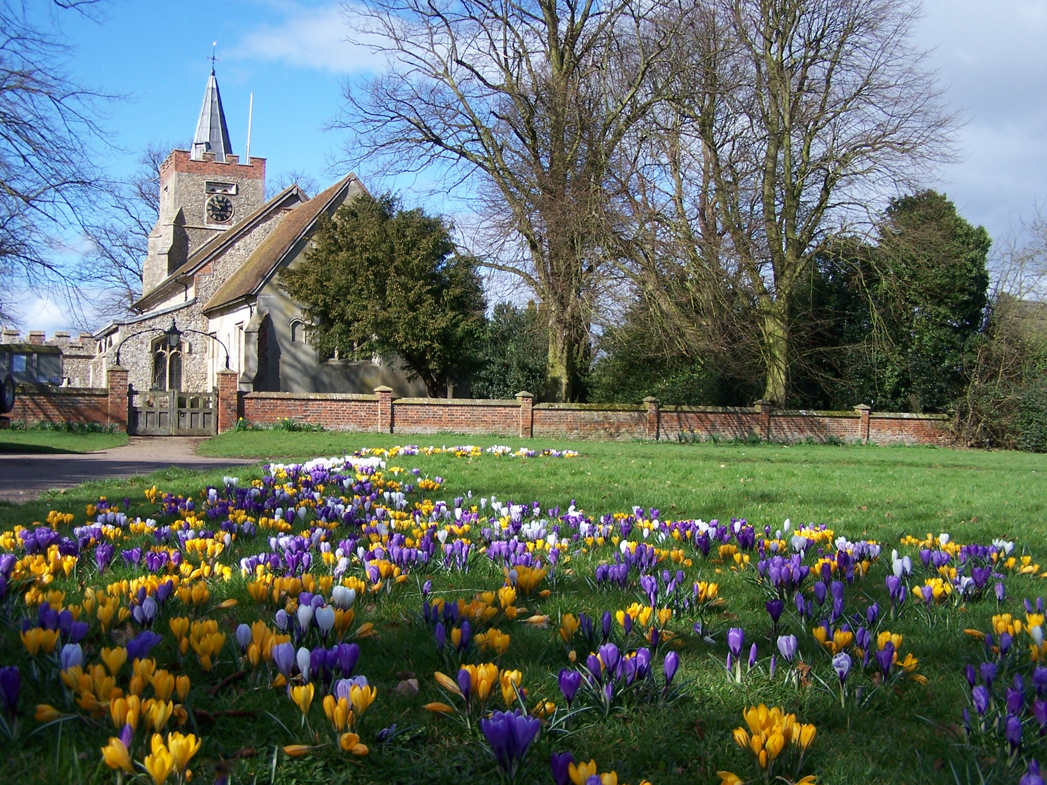 church and crocuses