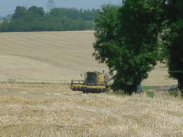 Harvesting in Henham