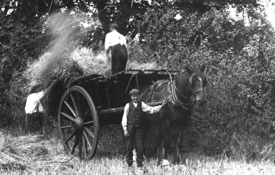1921 haymaking in glebe field