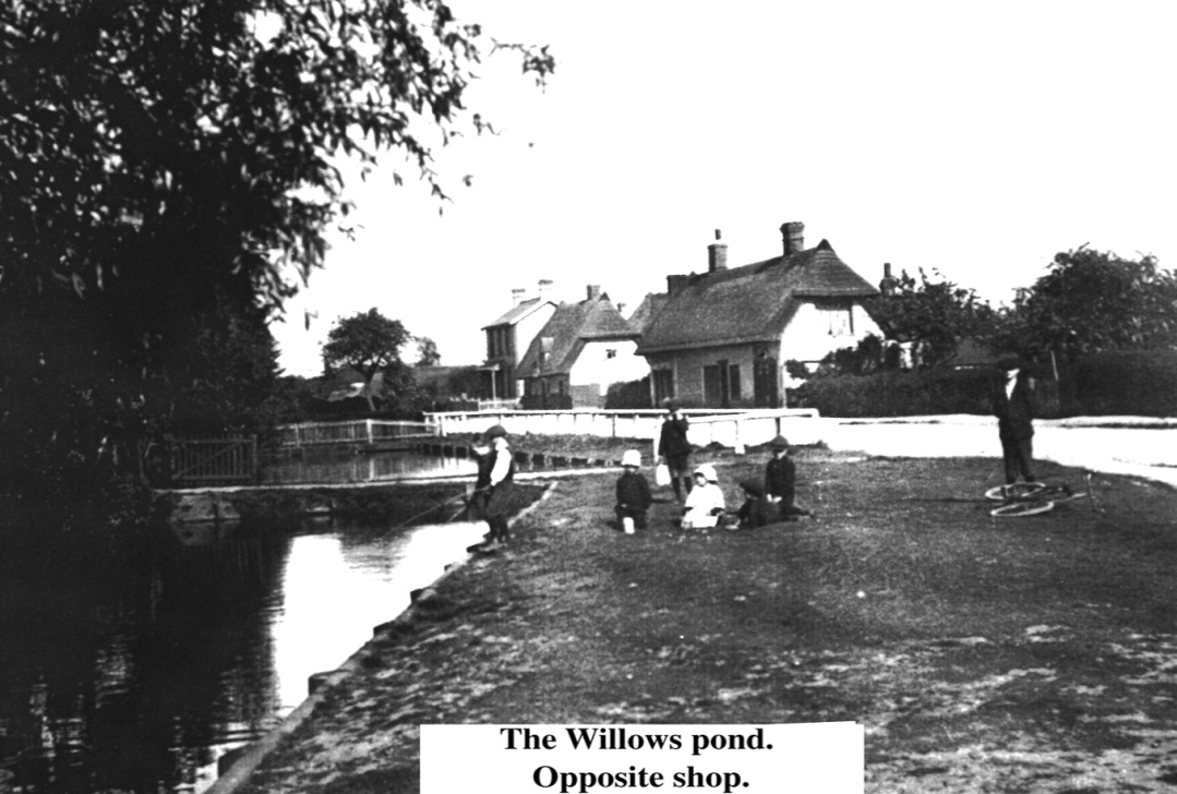 willows pond